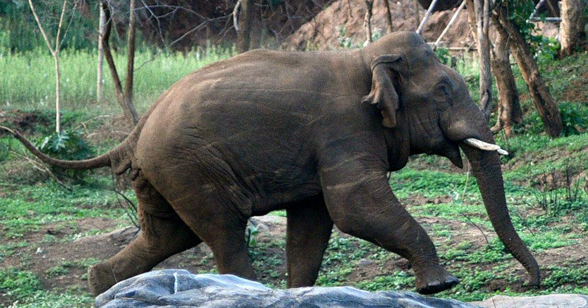 Kerala could have avoided the deaths of two elephants if it learnt to kill wild boar scientifically