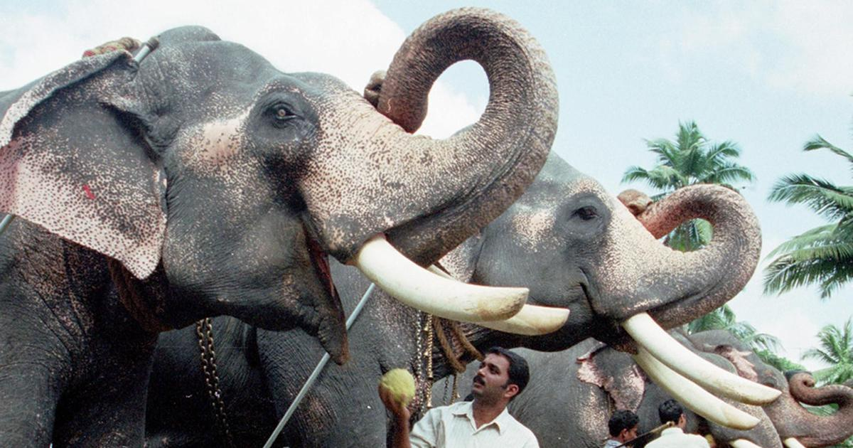 Kerala: Three arrested for killing of 10-year-old elephant in April