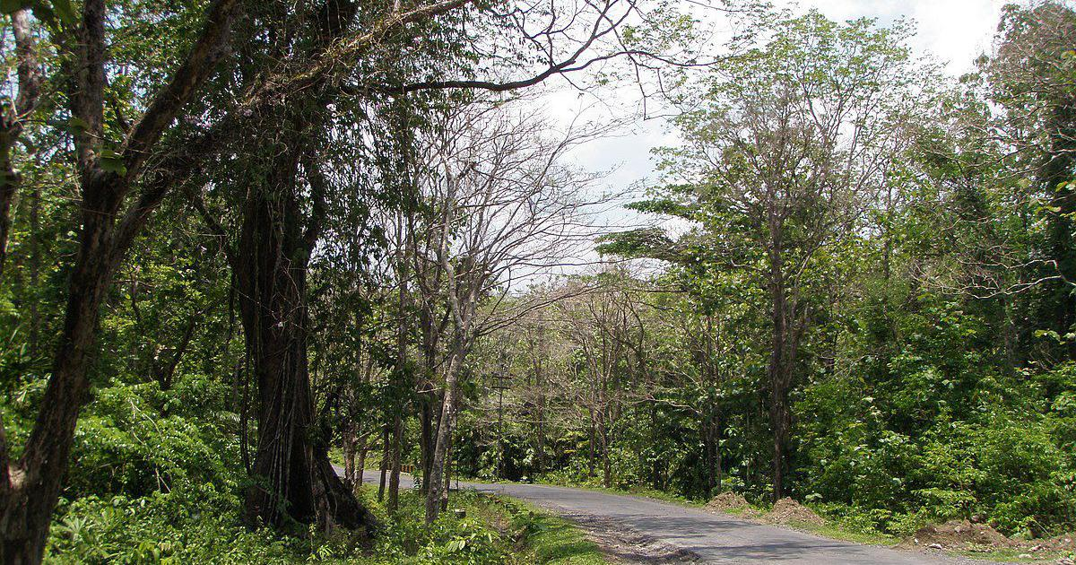 Forest officer denied work after he flagged environmental violations in Andaman and Nicobar