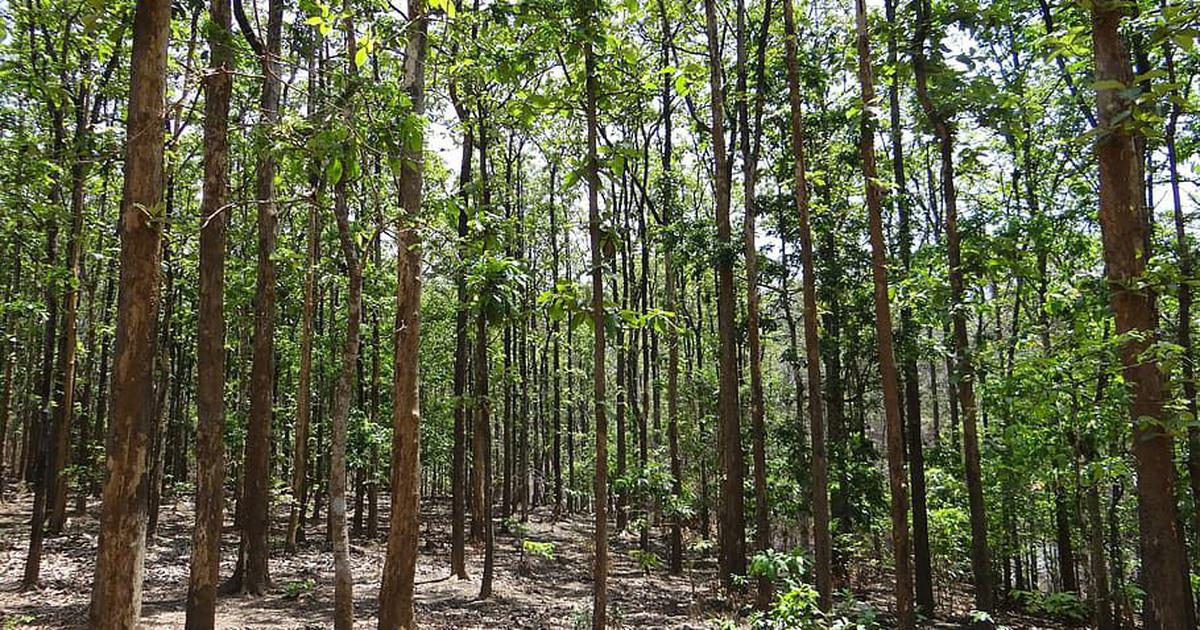 Why tree-plantation drives to fight climate risk may be counterproductive