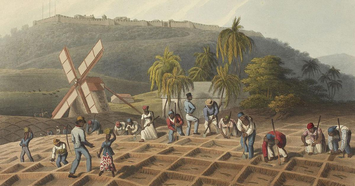 In the 1820s, a British movement to quit sugar accelerated the end of slavery in the West Indies