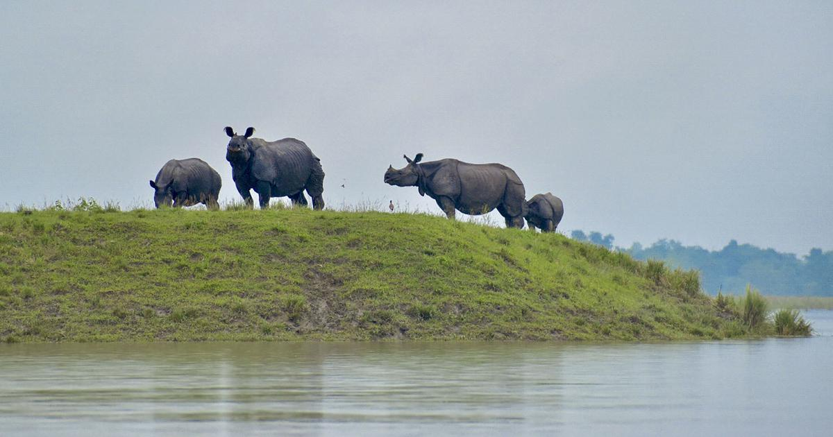 Animals Die as Flood water Submerge Assam's Kaziranga National Park