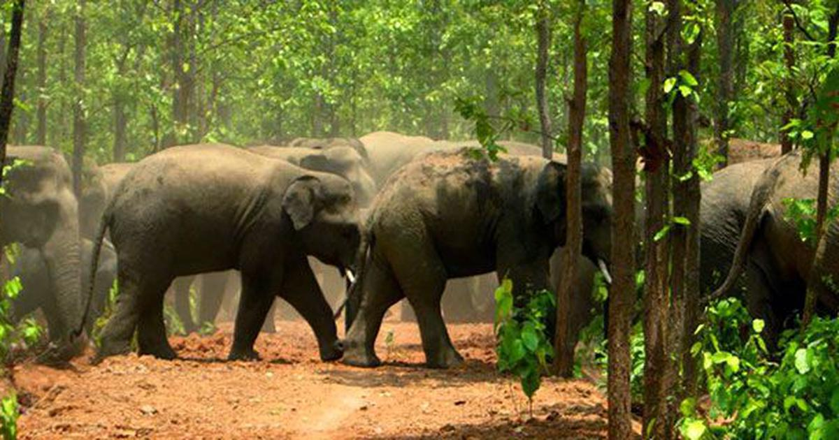 India's environment ministry wants to reduce human-elephant conflict by erecting walls and fences