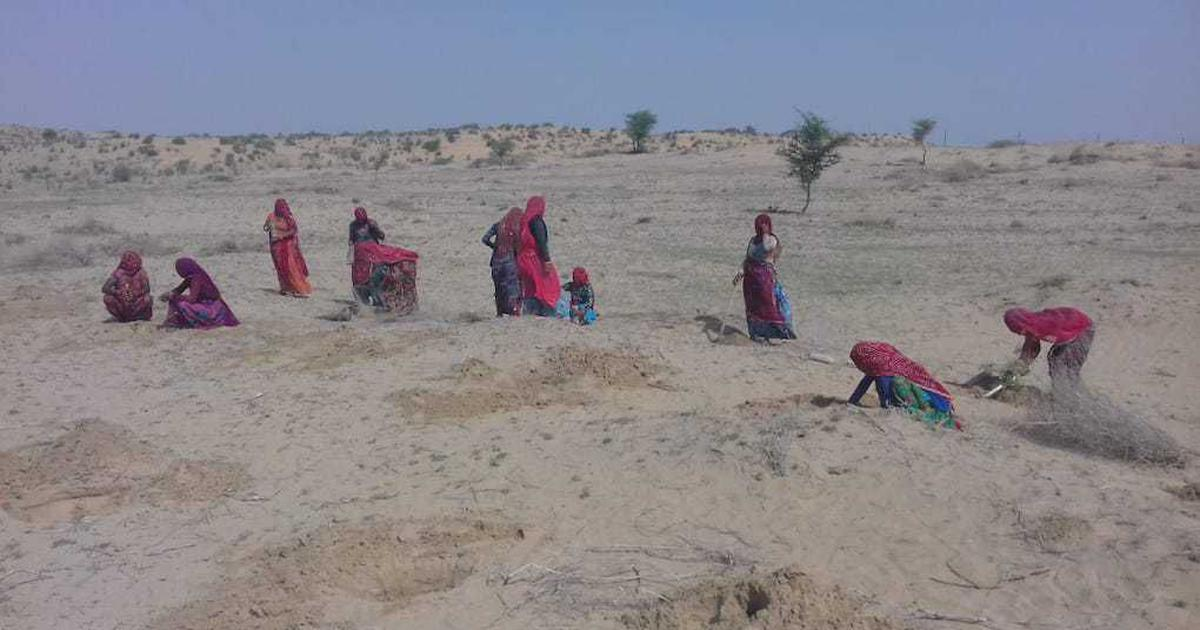 India's Thar desert is turning green. That isn't a good thing
