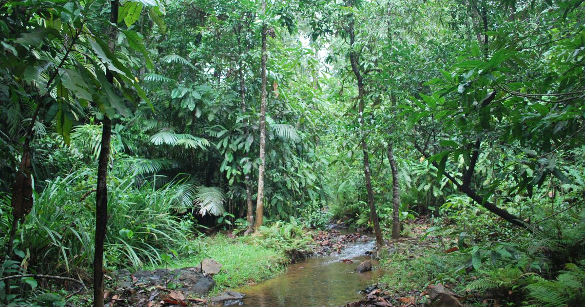 How the worship of sacred freshwater swamps is helping preserve biodiversity in the Western Ghats