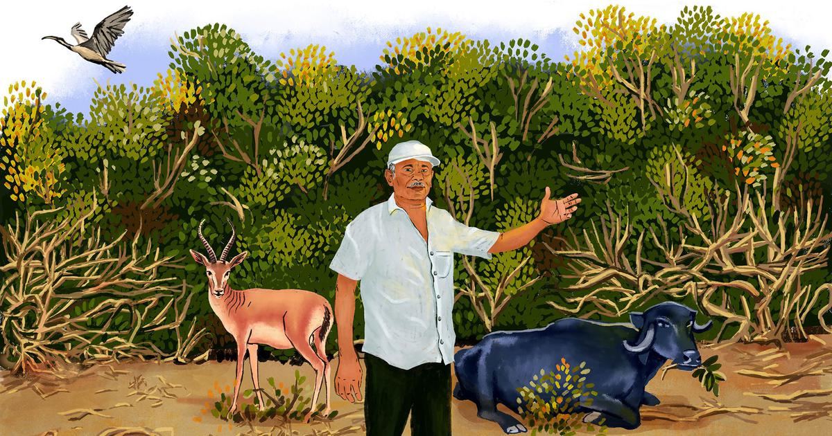 In a Kutch village, one man is successfully leading efforts to protect unique inland mangroves