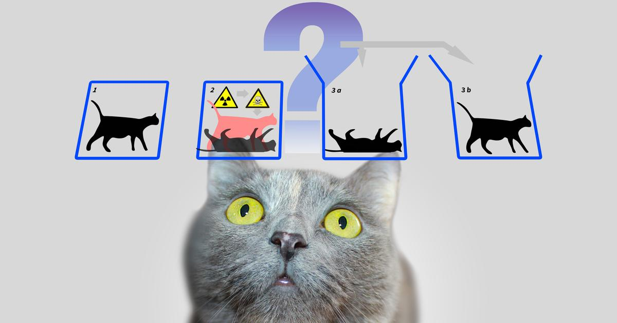 Could Schrödinger's cat exist in real life? We propose an experiment to find out