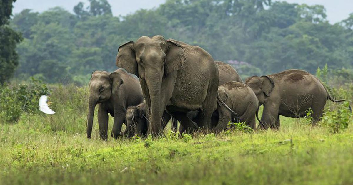 An electric fence on the Nepal border is exacerbating human-elephant conflicts in India