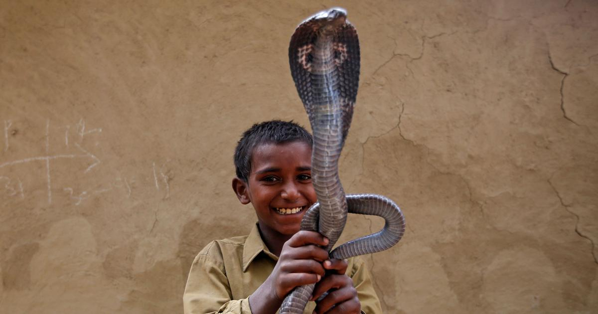 Uttarakhand is mapping snakes and training local communities to reduce conflict between them