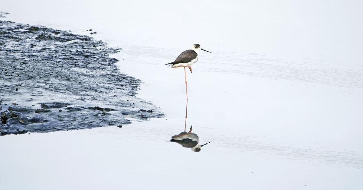 Mumbai's diverse bird habitats are facing a threat from rapid urbanisation