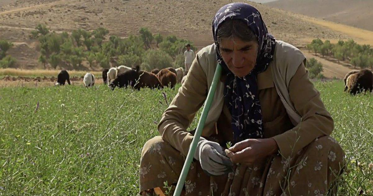 In film festival on women and farming, portraits of struggle, strength and wisdom