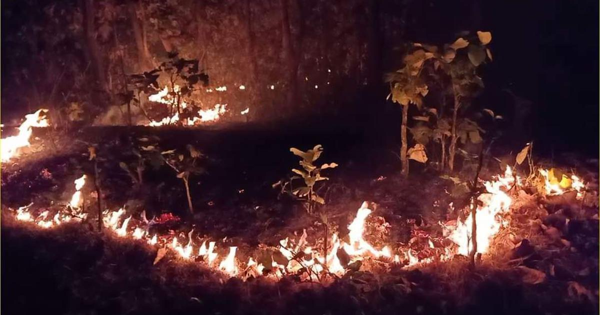 Simlipal forest fire raging for 10 days in Odisha contained, CM claims no damage to big trees