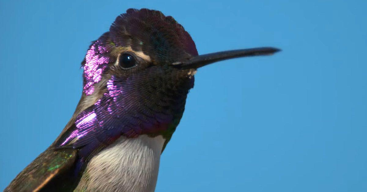 Watch: David Attenborough reveals how animals use colour to survive in the wild