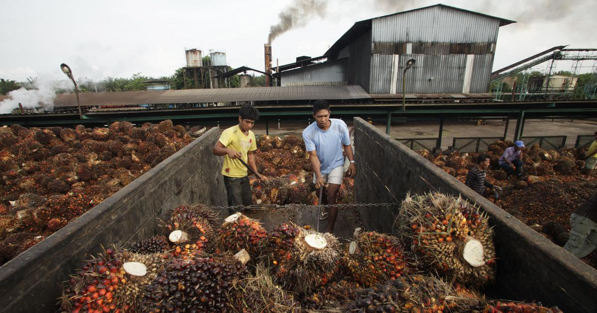 After South East Asia, India's thirst for palm oil may wreak environmental damage at home