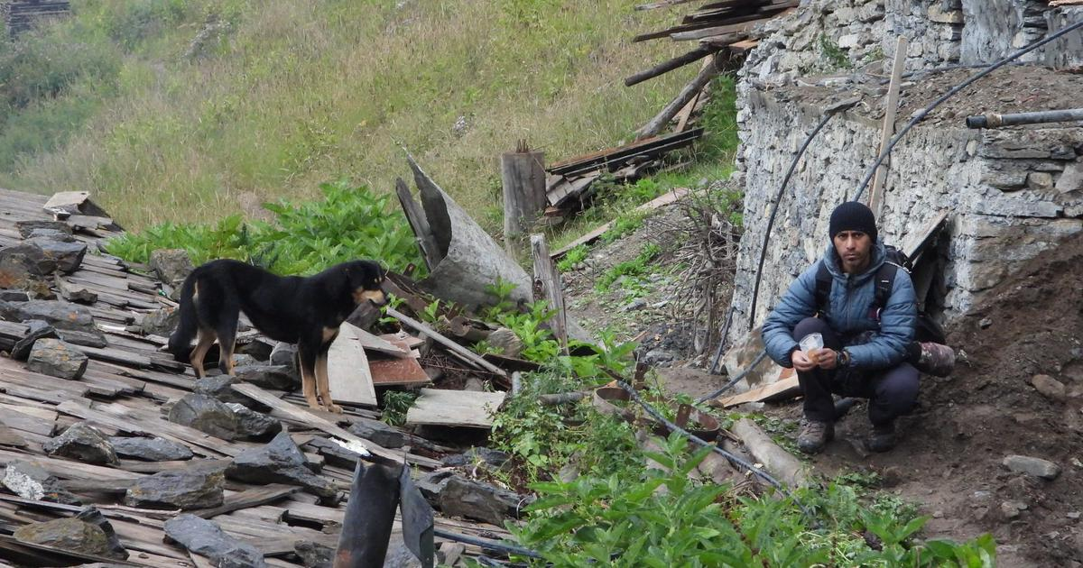 A booming population of feral dogs is threatening the biodiversity in the Himalayas