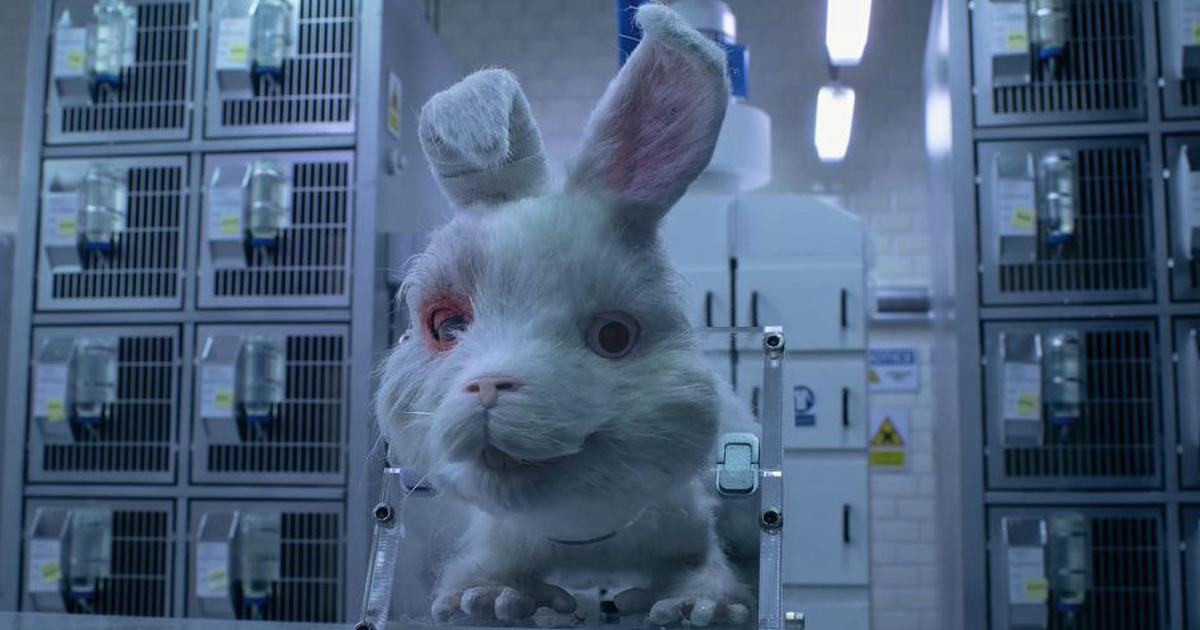 Watch: Taika Waititi, Ricky Gervais, Zac Efron, Olivia Munn in awareness film about animal testing