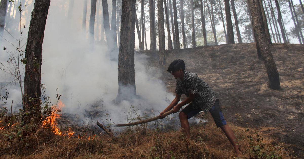 In India and Nepal, forest fires across the Himalayas are threatening lives and biodiversity