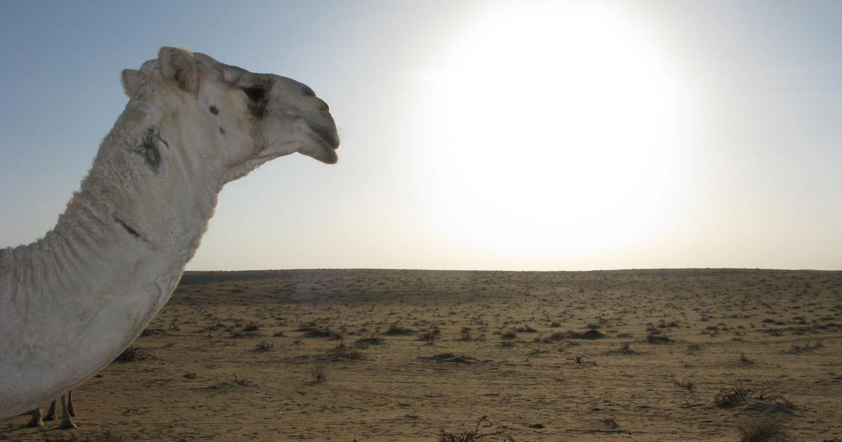 Even modern travel across the Arabian desert is an unpredictable adventure, shows this travelogue