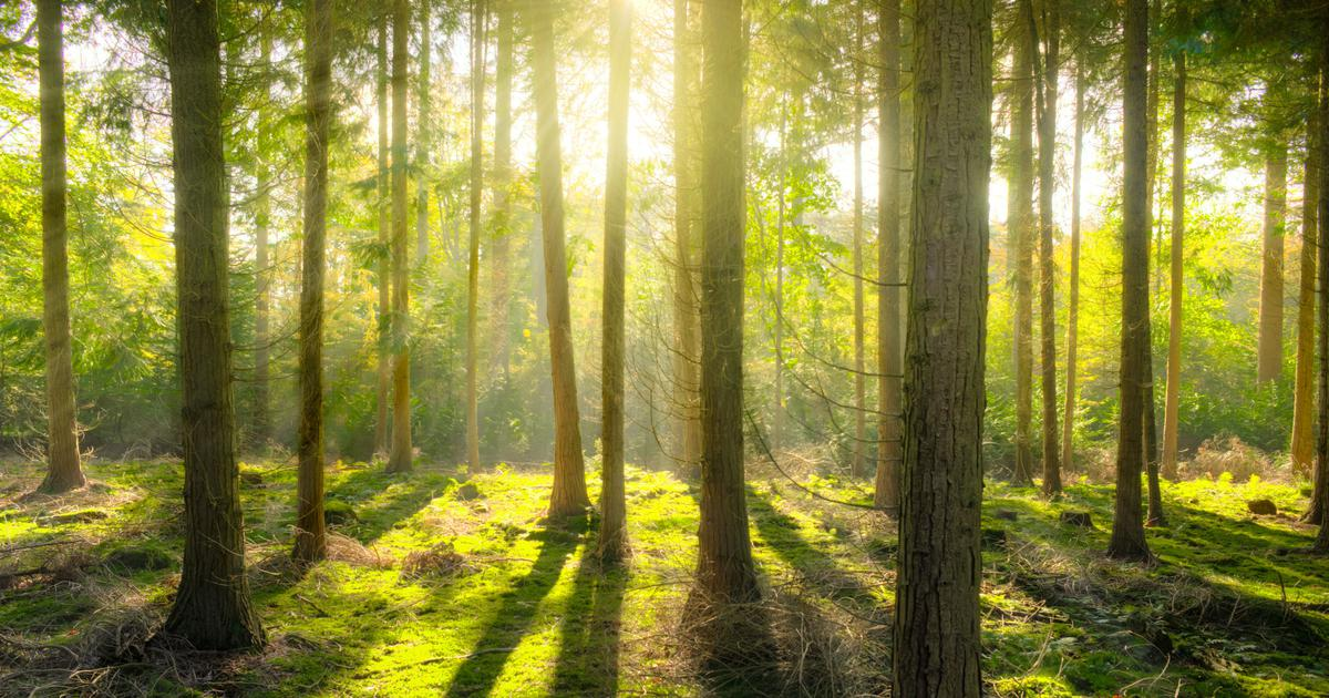 Why there is little need to be afraid of forests (and of the wild animals in them)