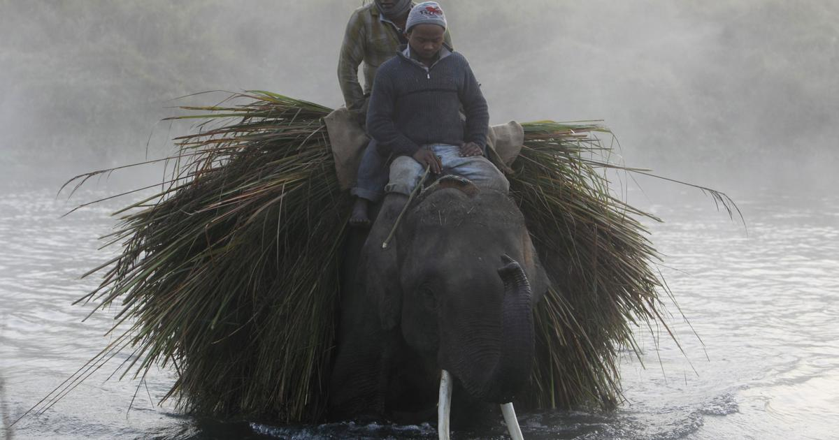 In Nepal, a bittersweet wildlife conservation victory has upended many local livelihoods