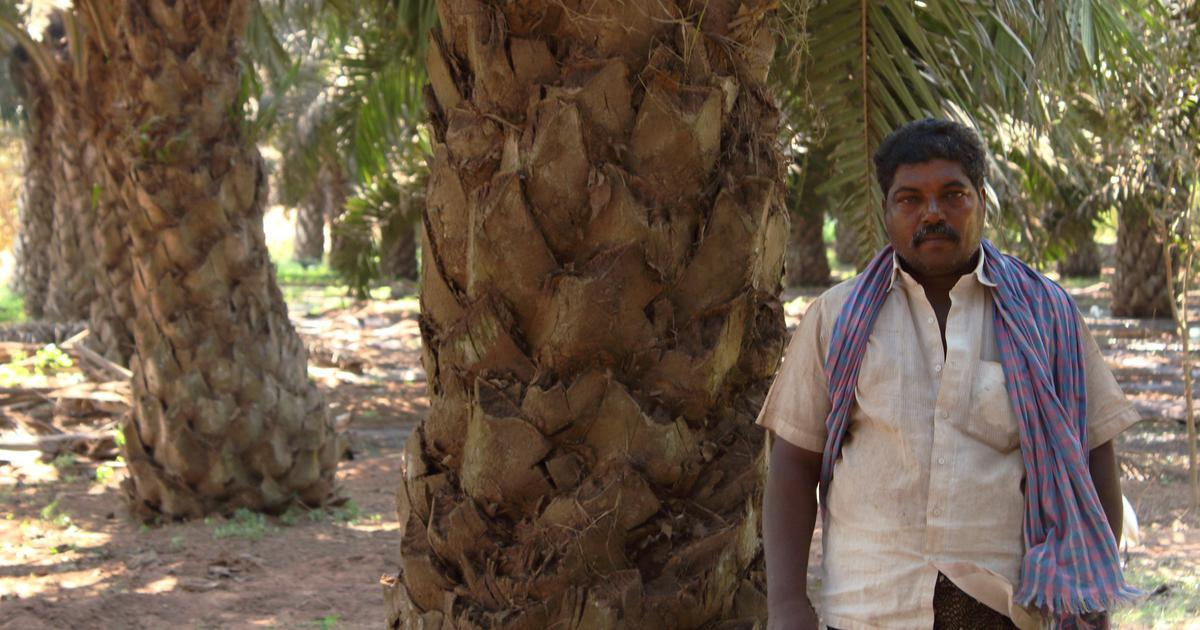 In Andhra Pradesh, oil palm is bringing economic prosperity – but at what cost?