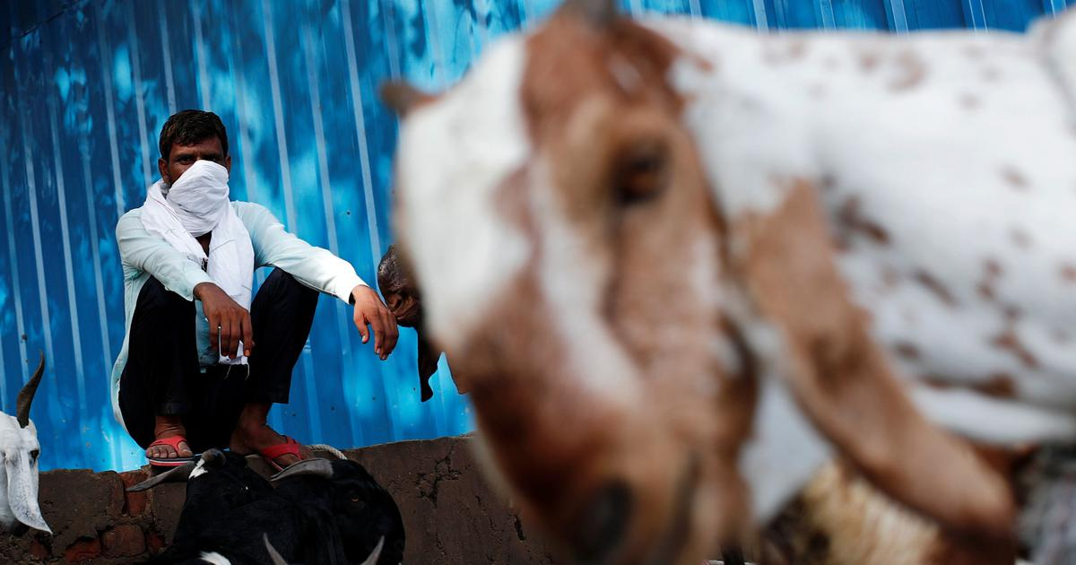 Bakri-Id: The debate on animal sacrifice should not be weaponised to create further hate