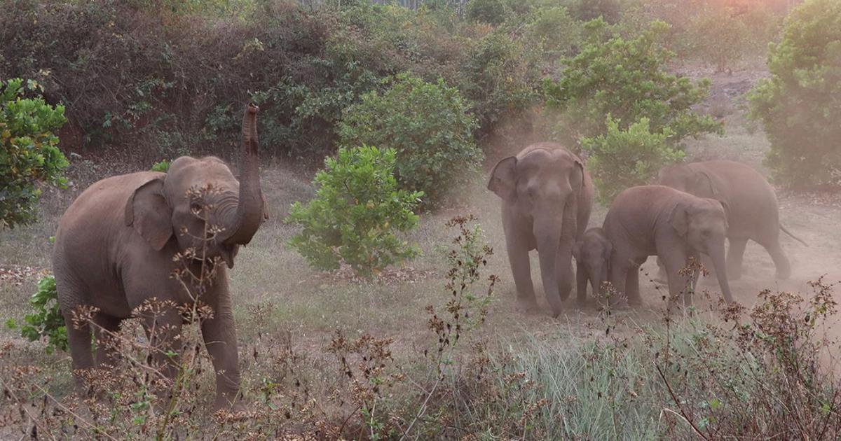Tired of crop raids, Andhra Pradesh farmers want to drive elephants back into Odisha