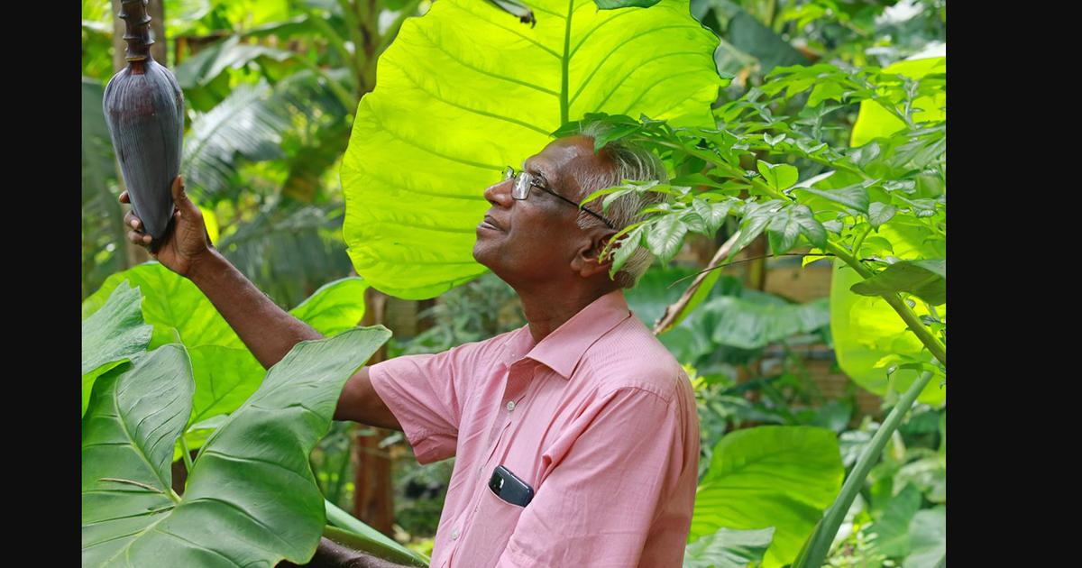 Kerala's traditional home gardens offer a natural way to mitigate climate change