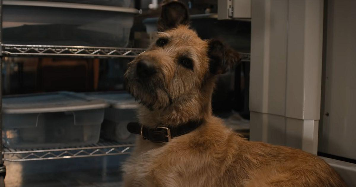 Watch: In 'Finch', Tom Hanks, an android and a dog