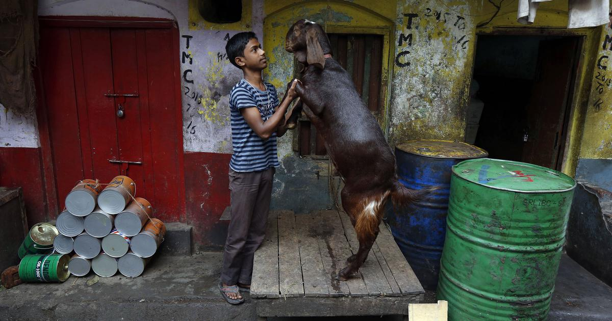 What makes mutton taste like mutton? Indian researchers are trying to find out