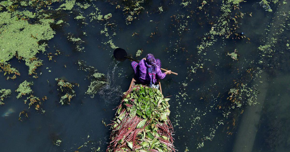 Kashmir's iconic Dal lake is dying a slow death – and authorities are fighting over it