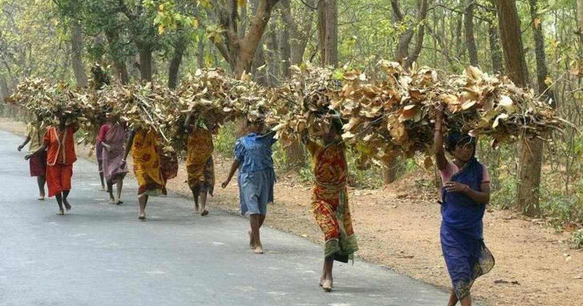 Why Forest Dwellers are Being Evicted?