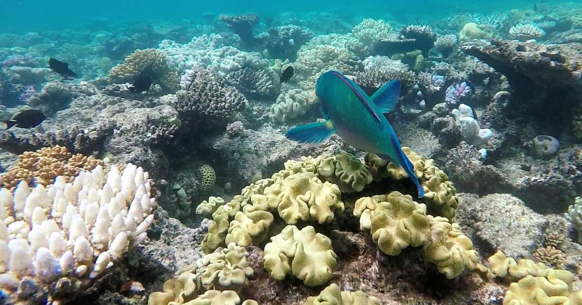 Sound waves: The ocean's music holds the answer to restoring dying coral reefs