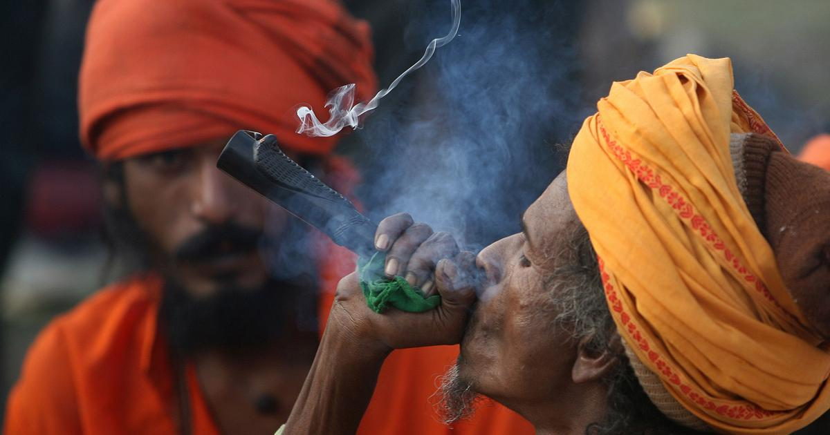Why are weed and hash illegal in India, but not bhang?