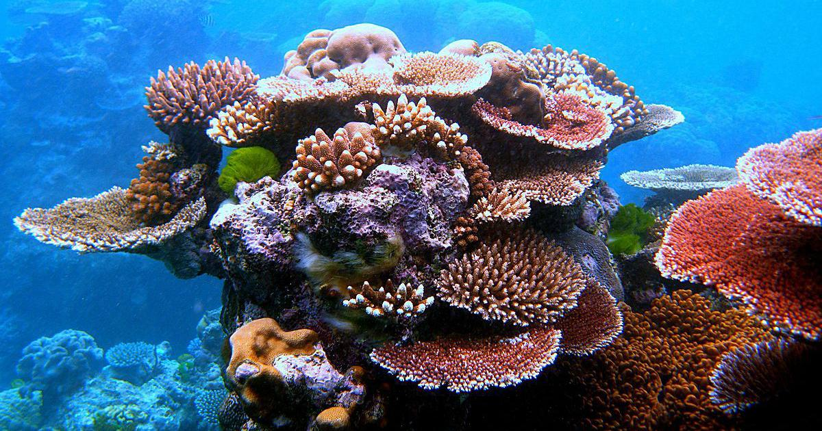 Could 3D printing help replace coral reef habitats lost to climate change?