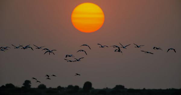 In Gujarat's Kutch, a horticulture boom is decimating the biodiversity hotspot's bird population