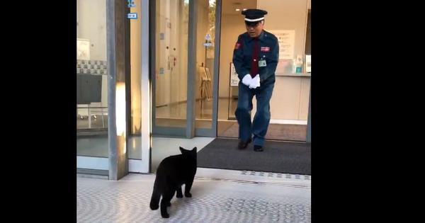 Watch: A pair of cats has been trying to enter a museum building in Japan for two years