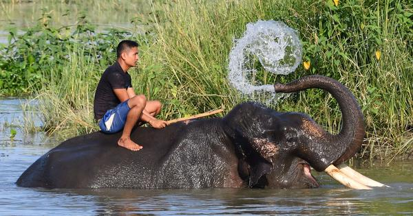India is pushing a plan to protect elephants in the wild – but is ignoring animals in captivity