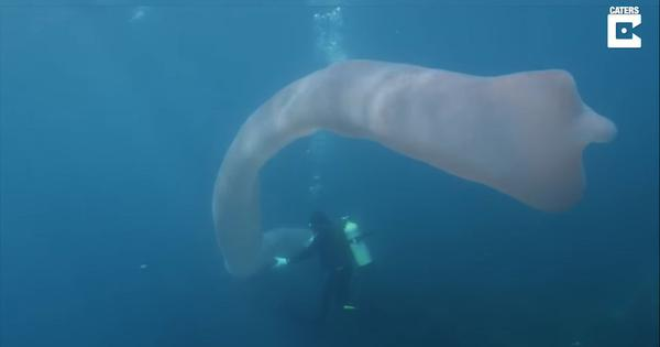 Watch: Divers found this mysterious 26-foot-long sea 'creature' off the coast of New Zealand