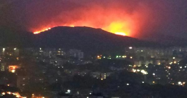 Mumbai: Forest fire in Goregaon doused, cause not yet known