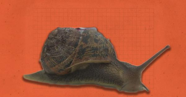 New Year smiles: Need Speed? Welcome to the World Snail Racing Championship