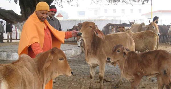 UP Cabinet clears ordinance making cow slaughter punishable with 10 years' imprisonment