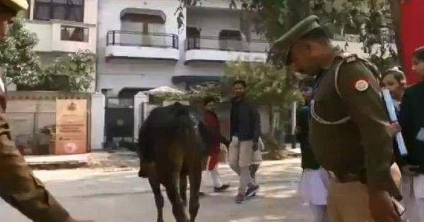 Watch: A stray cow wandered into the Pravasi Bharatiya Divas venue in Varanasi