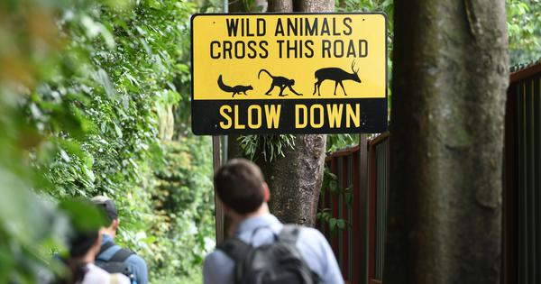Making roads safer for wildlife also saves money