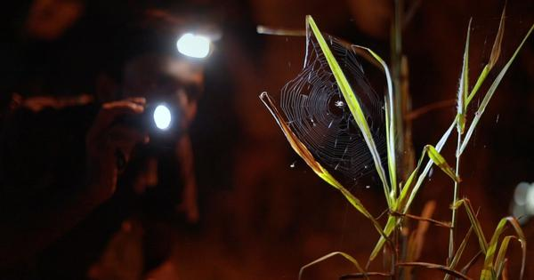 Eco India: India's 'Spiderman' who is on a quest to document the country's native spider species