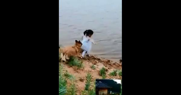 Watch: A dog saves a child from falling into a stream when trying to retrieve her ball