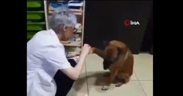 Watch: An injured dog walking to a pharmacy to get treatment is melting hearts online