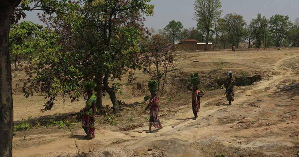 An Indian government afforestation programme is brazenly usurping Adivasi land