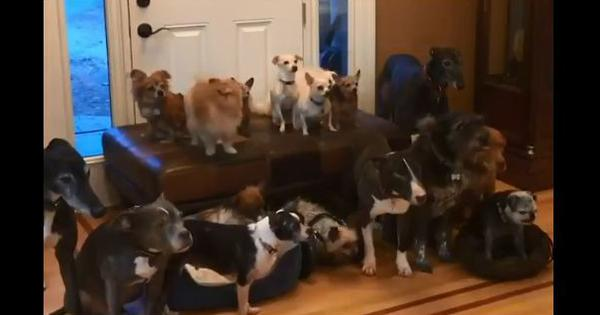 Watch: If you thought taking a photograph of a group of dogs is easy, think again