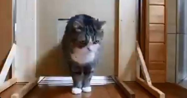 Watch: Cats show how to get around obstacles set for them by humans